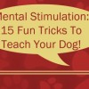 15 Fun Tricks To Teach Your Dog | Denver Dog Training